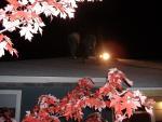 TR Roofing 026.jpg